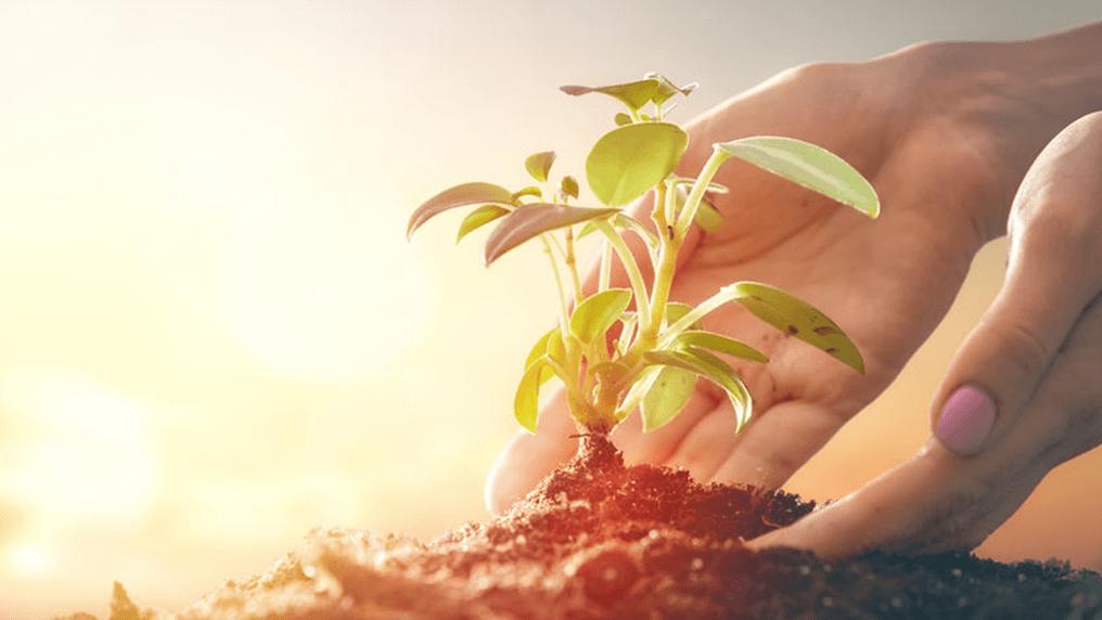 8 sposobów, jak żyć bardziej ekologicznie